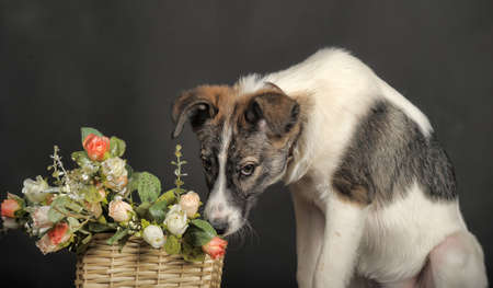 Cute puppy and a basket of flowers photo