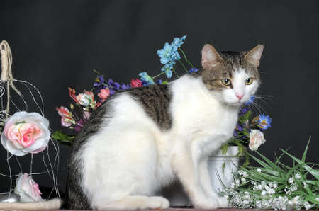 annie: cat and flowers