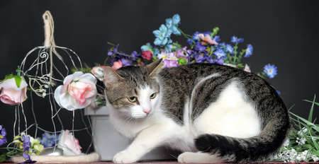 cat and flowers photo
