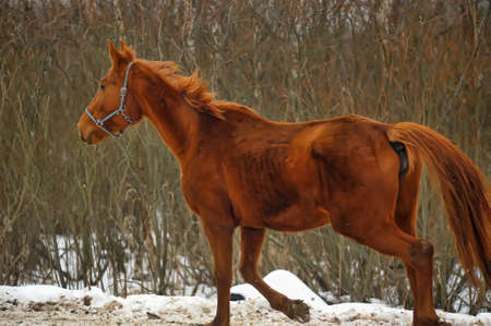 A close-up photo of a brown horse. Stock Photo