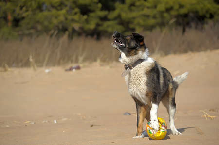 dog catches a ball on the beach photo