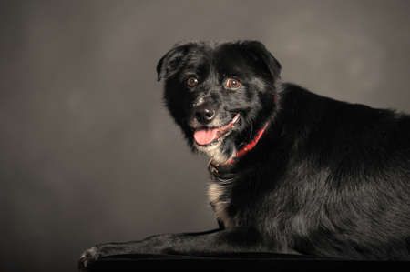 Close-up of Mixed-breed dog photo