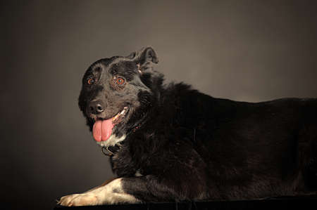 Close-up of Mixed-breed dog photo