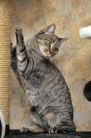Cute Cat Scratching a Post Stock Photo
