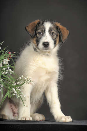 cute puppy and flower basket photo