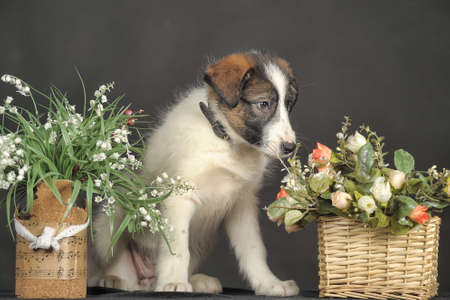 cute puppy and flower baskets photo