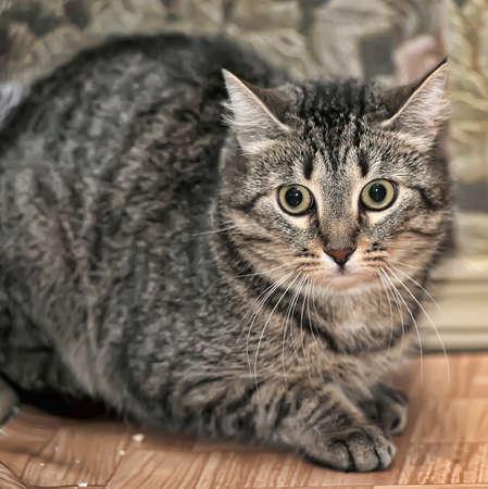 tabby cat scared photo