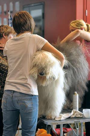 assessments: International Dog Show Spring Petersburg - 2014 Editorial