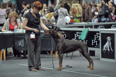 parameters: International dog show