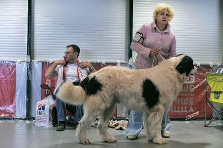 assessments: International Dog Show Spring Petersburg - 2014