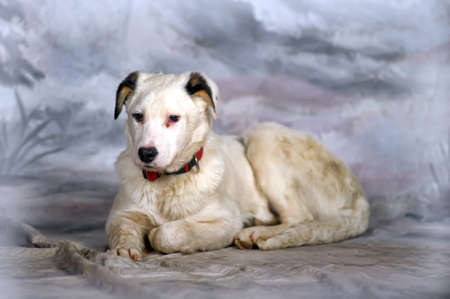 Beautiful, large, white with black spots puppy, pooch. photo