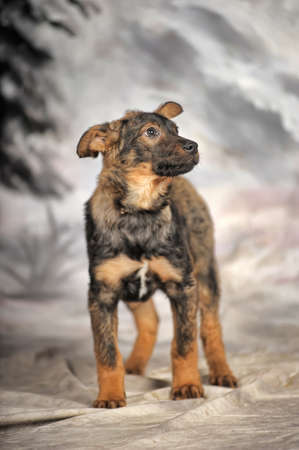crossbreed puppy on a winter background photo