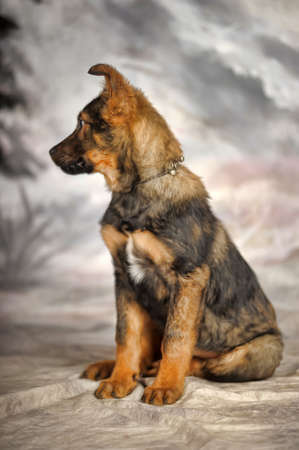 crossbreed puppy on a winter background