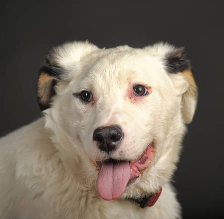 half blooded: White black spots puppy dog ??mongrel. Stock Photo