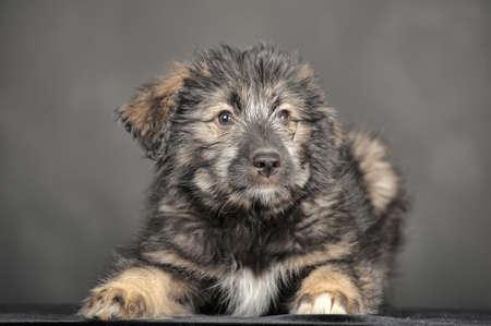 cute fluffy puppy photo
