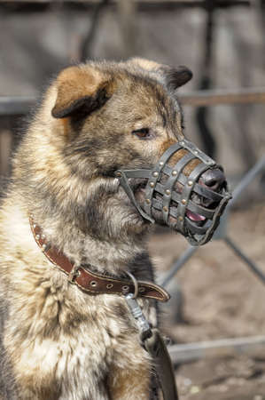 pooch: Large dog pooch muzzled outdoor