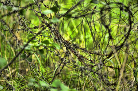 barbed wire in the woods photo