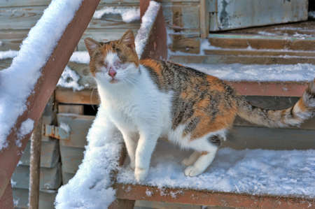Blind cat on the porch in the winter. photo