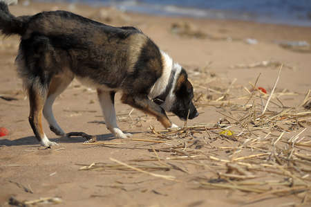 Dog runs and plays with a ball on the shore photo