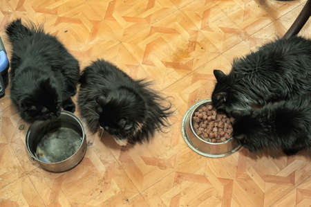 four cats eat