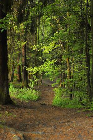 undergrowth: Path in a dark forest in spring Stock Photo