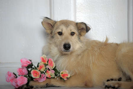 woeful: terrier mongrel dog with flowers in studio