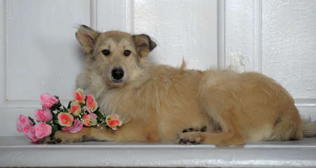 terrier mongrel dog with flowers in studio photo