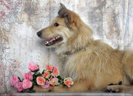 kerry blue terrier: terrier mongrel dog with flowers in studio