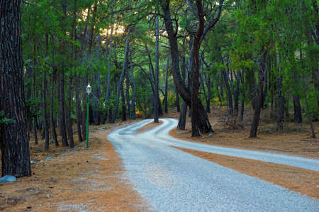 mountaintops: Road in the pine forest of Phaselis, Turkey.
