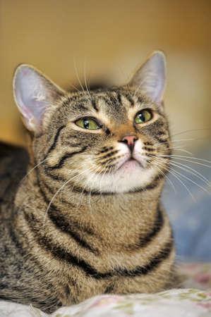 portrait of a beautiful striped cat