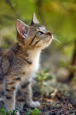 Little kitten in the forest photo