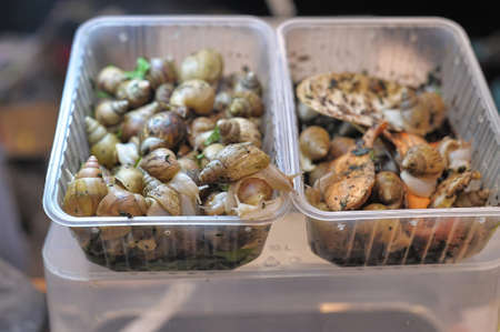 invertabrate: East African land snails for sale