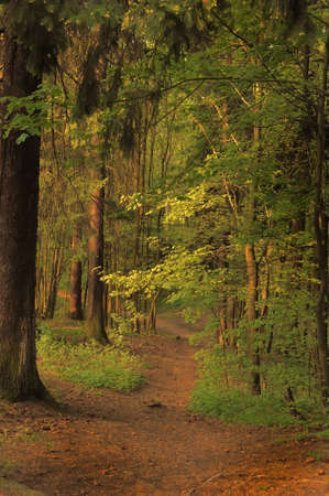 Pathway in spring forest photo