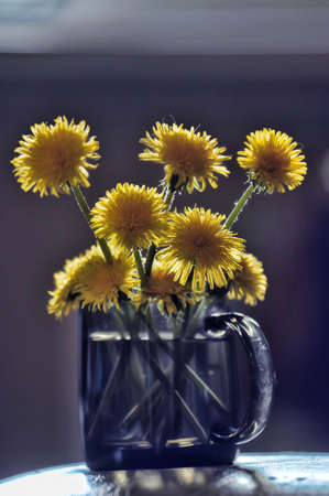 dandelions in a cup photo