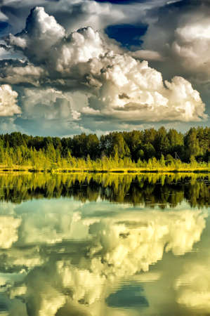 Forest near the water and reflection photo