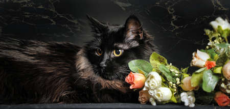 beautiful black cat lying next to roses photo