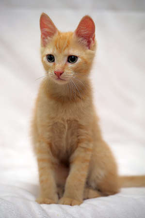 prying: Cute ginger kitten Stock Photo