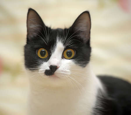 coy: black and white cat with a fun coloring