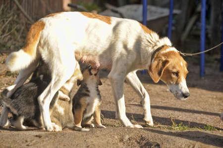 � fond: chiots chien de chien d'alimentation