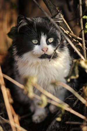 Cat sitting on a grass and leaves bedding in an autumn day. photo