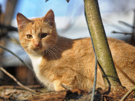 Young ginger cat on a tree photo