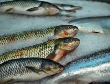 Fresh fish market photo