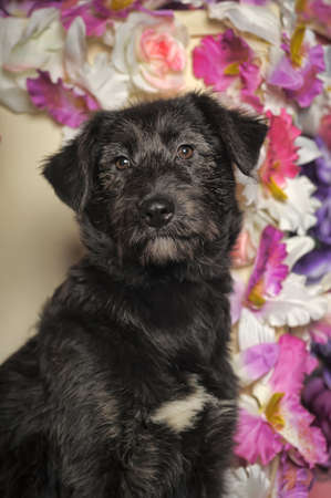 Black puppy purebred pooch on a floral with orchids photo
