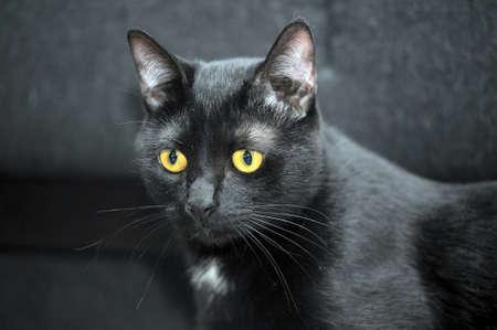 counterpane: Graceful black cat Stock Photo