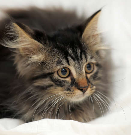 fluffy kitten photo