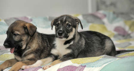 half breed: two puppies on the bed