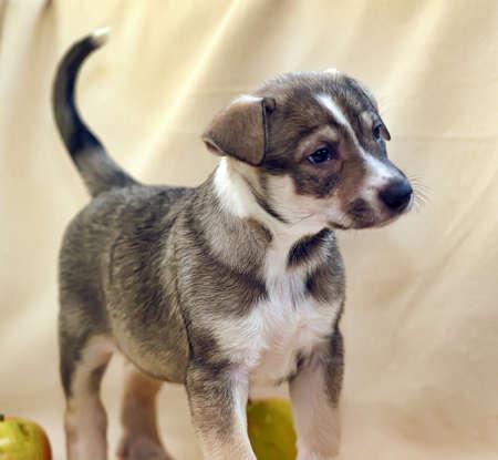 pooch: cute puppy pooch Stock Photo