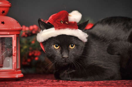 black cat in Christmas hat photo