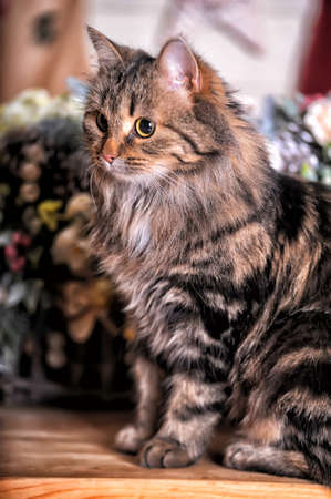 laying forward: Cat sitting on a background of a bouquet of flowers Stock Photo