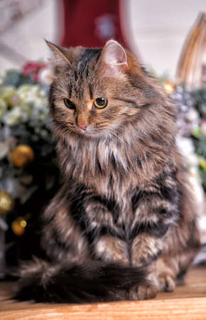 lying forward: Cat sitting on a background of a bouquet of flowers Stock Photo